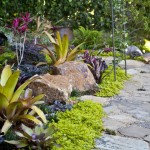 Bromeliad_Flagstone Path